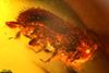 http://mczbase.mcz.harvard.edu/specimen_images/entomology/paleo/large/PALE-29092_syn1_Scolytinae.jpg