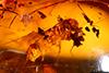 http://mczbase.mcz.harvard.edu/specimen_images/entomology/paleo/large/PALE-29097_syn1_Platypodinae.jpg
