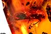 http://mczbase.mcz.harvard.edu/specimen_images/entomology/paleo/large/PALE-29097_syn2_Platypodinae.jpg