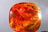 http://mczbase.mcz.harvard.edu/specimen_images/entomology/paleo/large/PALE-29101_Platypodinae_1.jpg