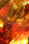 http://mczbase.mcz.harvard.edu/specimen_images/entomology/paleo/large/PALE-29101_syn2_Mycetophilidae.jpg