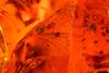 http://mczbase.mcz.harvard.edu/specimen_images/entomology/paleo/large/PALE-29101_syn4_Mycetophilidae.jpg