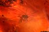 http://mczbase.mcz.harvard.edu/specimen_images/entomology/paleo/large/PALE-29101_syn5_Sciaridae.jpg