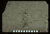 Media of type image, MCZ:Ent:PALE-2918 Identified as Pheidole tertiaria type status Holotype of Pheidole tertiaria. . Aspect: full