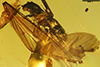 http://mczbase.mcz.harvard.edu/specimen_images/entomology/paleo/large/PALE-29221_syn2_Isoptera.jpg
