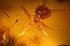 http://mczbase.mcz.harvard.edu/specimen_images/entomology/paleo/large/PALE-29226_syn5_Formicidae.jpg