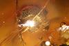 http://mczbase.mcz.harvard.edu/specimen_images/entomology/paleo/large/PALE-29229_Platypodinae_2.jpg