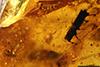 http://mczbase.mcz.harvard.edu/specimen_images/entomology/paleo/large/PALE-29247_Platypodinae.jpg