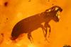 http://mczbase.mcz.harvard.edu/specimen_images/entomology/paleo/large/PALE-29252_syn4_Scolytinae.jpg