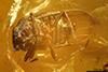 http://mczbase.mcz.harvard.edu/specimen_images/entomology/paleo/large/PALE-29255_syn7_Auchenorrhyncha.jpg