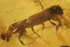 http://mczbase.mcz.harvard.edu/specimen_images/entomology/paleo/large/PALE-29258_syn1_Platypodinae.jpg