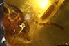 http://mczbase.mcz.harvard.edu/specimen_images/entomology/paleo/large/PALE-29268_syn2_Isoptera_qm.jpg