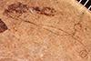 http://mczbase.mcz.harvard.edu/specimen_images/entomology/paleo/large/PALE-292_Leptobrochus_luteus_type_(cp_291).jpg