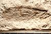 http://mczbase.mcz.harvard.edu/specimen_images/entomology/paleo/large/PALE-29625_Lemmatophora_sp_(cp_29642).jpg