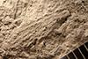 http://mczbase.mcz.harvard.edu/specimen_images/entomology/paleo/large/PALE-32199_Liomopteridae_qm_(cp_32194).jpg