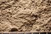 http://mczbase.mcz.harvard.edu/specimen_images/entomology/paleo/large/PALE-32244_Hemiptera_det_(cp_32246).jpg