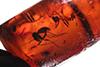 http://mczbase.mcz.harvard.edu/specimen_images/entomology/paleo/large/PALE-33505_Iridomyrmex_hispaniolae_paratype.jpg