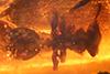 http://mczbase.mcz.harvard.edu/specimen_images/entomology/paleo/large/PALE-33514_Exocryptocerus_serratus_paratype.jpg