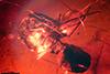 http://mczbase.mcz.harvard.edu/specimen_images/entomology/paleo/large/PALE-33523_Monacis_prolaminata_paratype.jpg