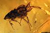 http://mczbase.mcz.harvard.edu/specimen_images/entomology/paleo/large/PALE-33538_Blattaria_to_be_encumbered.jpg