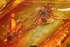 http://mczbase.mcz.harvard.edu/specimen_images/entomology/paleo/large/PALE-33545_Sciaridae.jpg