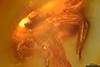 http://mczbase.mcz.harvard.edu/specimen_images/entomology/paleo/large/PALE-33545_syn2_Mycetophilidae.jpg
