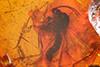http://mczbase.mcz.harvard.edu/specimen_images/entomology/paleo/large/PALE-33570_Mycetophilidae.jpg