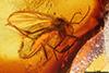 http://mczbase.mcz.harvard.edu/specimen_images/entomology/paleo/large/PALE-33572_Mycetophilidae.jpg