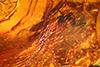 http://mczbase.mcz.harvard.edu/specimen_images/entomology/paleo/large/PALE-33607_syn1_Chironomidae.jpg