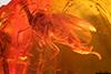 http://mczbase.mcz.harvard.edu/specimen_images/entomology/paleo/large/PALE-33615_Sciaridae.jpg