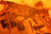 http://mczbase.mcz.harvard.edu/specimen_images/entomology/paleo/large/PALE-33621_syn6_Formicidae.jpg