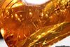 http://mczbase.mcz.harvard.edu/specimen_images/entomology/paleo/large/PALE-33622_Pseudomyrmex_macrops_holotype.jpg