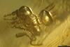 http://mczbase.mcz.harvard.edu/specimen_images/entomology/paleo/large/PALE-33627_syn2_Chalcidoidea_qm.jpg