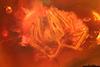 http://mczbase.mcz.harvard.edu/specimen_images/entomology/paleo/large/PALE-33644_syn4_Araneae.jpg