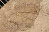 http://mczbase.mcz.harvard.edu/specimen_images/entomology/paleo/large/PALE-33648_Pterygota.jpg
