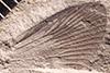 http://mczbase.mcz.harvard.edu/specimen_images/entomology/paleo/large/PALE-33671_Blattaria.jpg