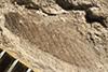 http://mczbase.mcz.harvard.edu/specimen_images/entomology/paleo/large/PALE-33675a_Pterygota.jpg