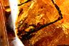 http://mczbase.mcz.harvard.edu/specimen_images/entomology/paleo/large/PALE-34020_Nematocera_1.jpg