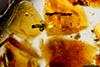 http://mczbase.mcz.harvard.edu/specimen_images/entomology/paleo/large/PALE-34020_Nematocera_2.jpg