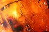 http://mczbase.mcz.harvard.edu/specimen_images/entomology/paleo/large/PALE-34021_Nematocera.jpg