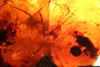 http://mczbase.mcz.harvard.edu/specimen_images/entomology/paleo/large/PALE-34024_Arthropoda.jpg
