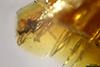 http://mczbase.mcz.harvard.edu/specimen_images/entomology/paleo/large/PALE-34025_Arthropoda.jpg