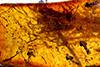 http://mczbase.mcz.harvard.edu/specimen_images/entomology/paleo/large/PALE-34028_Pterygota_1.jpg