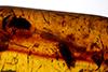 http://mczbase.mcz.harvard.edu/specimen_images/entomology/paleo/large/PALE-34029_Coleoptera_1.jpg