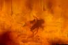http://mczbase.mcz.harvard.edu/specimen_images/entomology/paleo/large/PALE-34029_syn3_Diptera.jpg