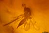 http://mczbase.mcz.harvard.edu/specimen_images/entomology/paleo/large/PALE-34031_syn3_Apocrita.jpg