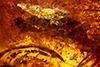 http://mczbase.mcz.harvard.edu/specimen_images/entomology/paleo/large/PALE-34033_Auchenorrhyncha_1.jpg