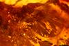 http://mczbase.mcz.harvard.edu/specimen_images/entomology/paleo/large/PALE-34034_syn1_Auchenorrhyncha_1.jpg