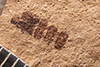 http://mczbase.mcz.harvard.edu/specimen_images/entomology/paleo/large/PALE-3476_Eutermes_meadii_cotype_2.jpg