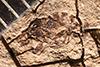 http://mczbase.mcz.harvard.edu/specimen_images/entomology/paleo/large/PALE-3491_Brachycera_1.jpg